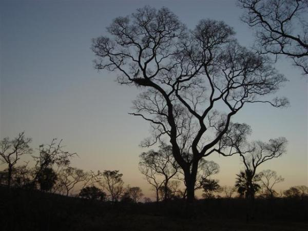 South Pantanal -  Entardecer
